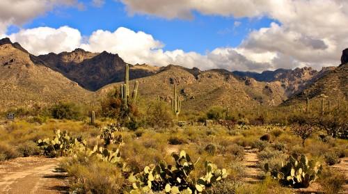 Sabino Canyon Tucson Arizona Natural Desert Oasis