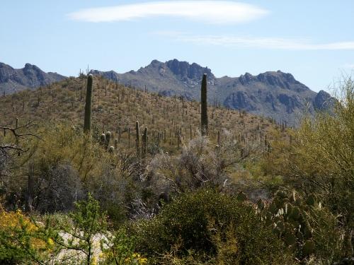Arizona Sonora Desert Museum in Tucson Arizona