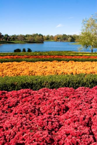 The Chicago Botanic Garden Has The Largest Collection Of In The World And  Is One Of The Most Visited Public Gardens In The United States.