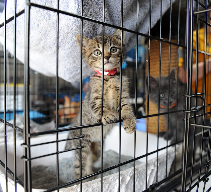 Temporary Housing For Cats In Cleveland