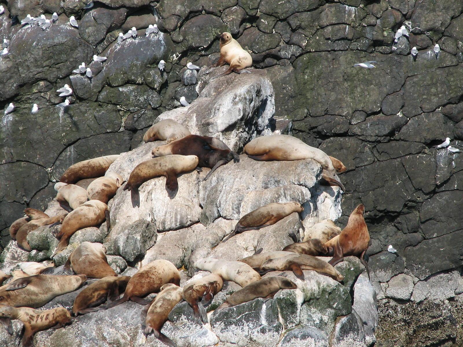CRAIGSLIST ALASKA ANCHORAGE