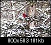 Pictures of Arkansas-dsc_2432-bird.jpg