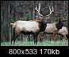 Sell NW Arkansas-elk-color_resize.jpg