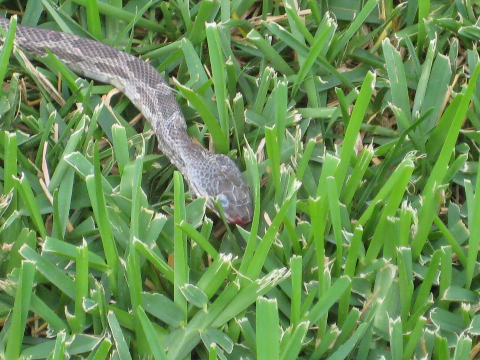 what to do snake in our enclosed patio austin lakeway house