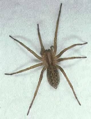Creepy Crawlers In Bend Just Curious Medford Klamath