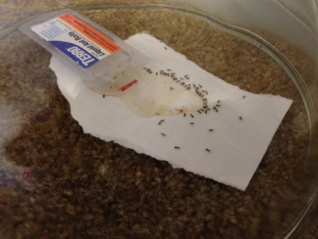 Ant infestation! (eating, safe, throw, food) - Cats - - City-Data Forum