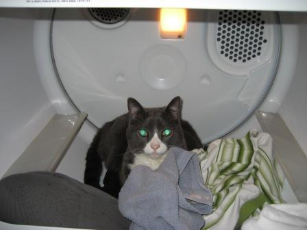 I also try to keep the dryer closed to avoid them getting in there.