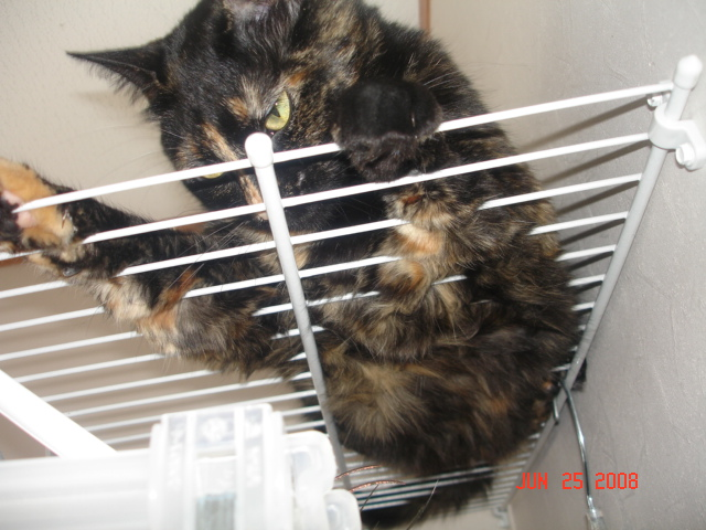 Cat in Dryer (kitten, time, kitty) - Cats - Page 2 - City-Data Forum
