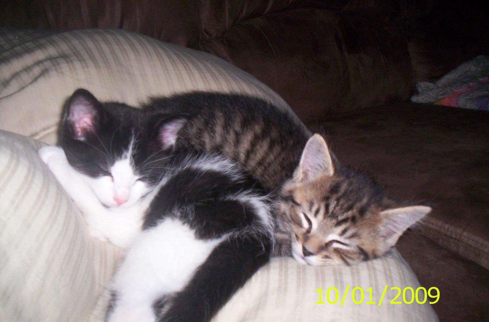 free kittens salem oregon