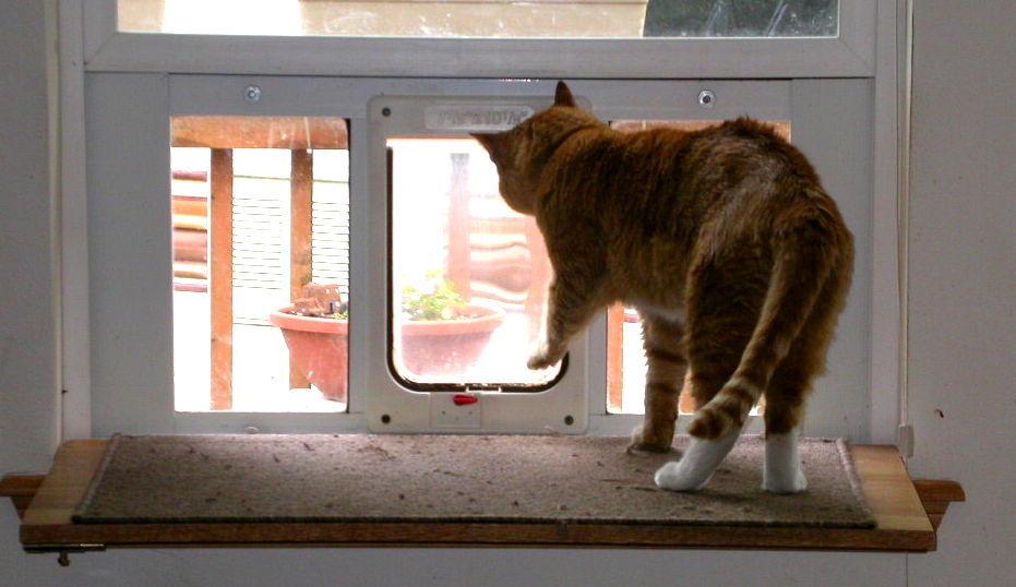 So my cat can unlock the kitty door-goingout.jpg ... & So my cat can unlock the kitty door - Cats - - Page 2 - City-Data Forum