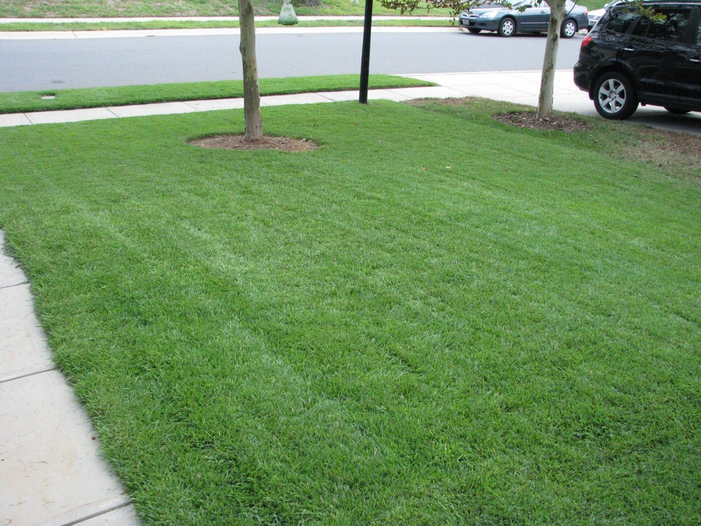 Bermuda Sod Installer Any Recommendations How Much Live