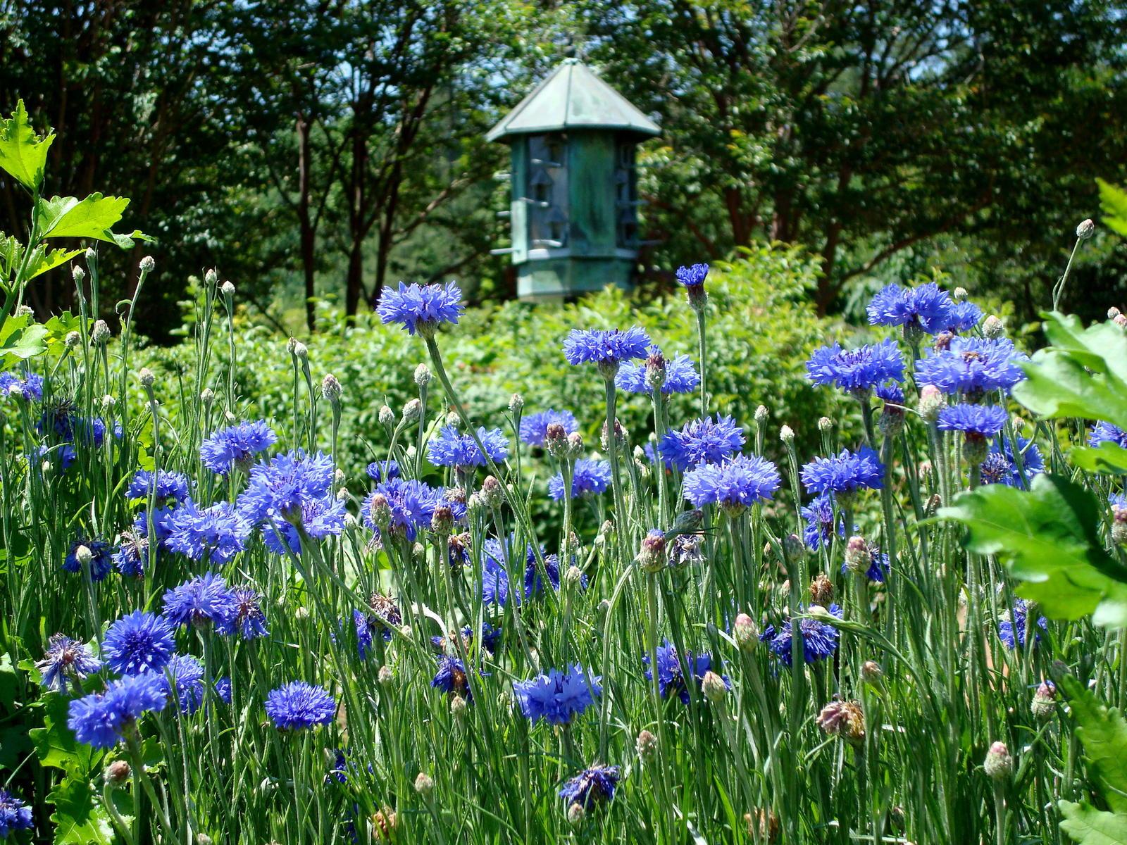 Daniel Stowe Botanical Garden Dsc03202 ...
