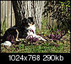 Pet Picture gallery-0701160003.jpg