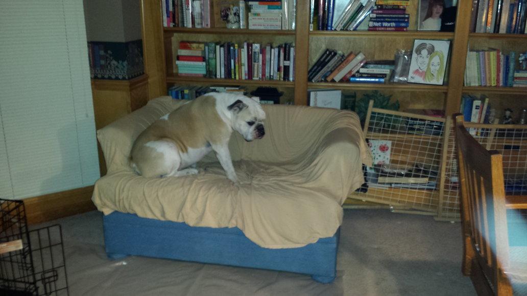 Cheaper Alternative To Dog Beds Bulldog Clean Skin