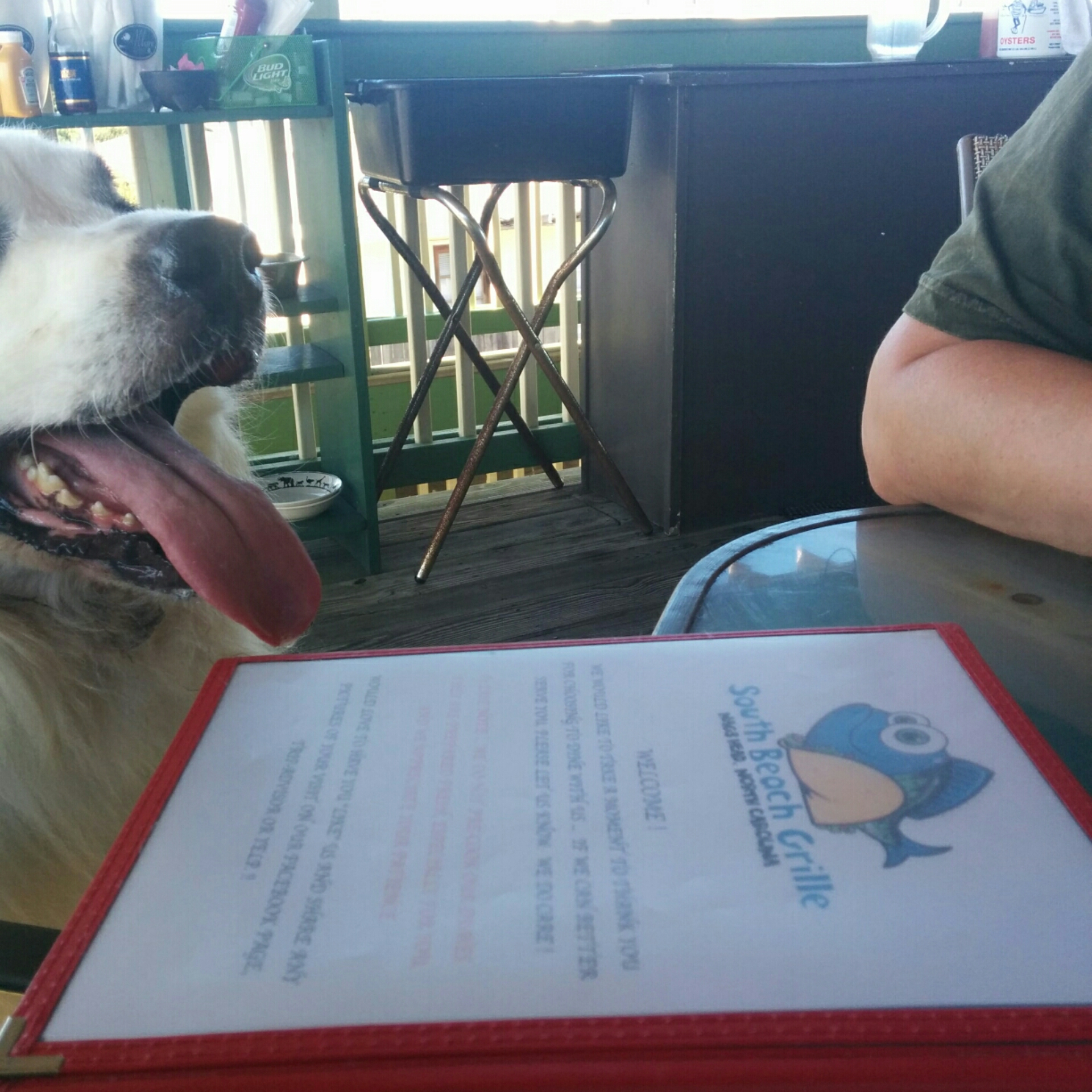 Dog Friendly Restaurants Go Shepherd Shepherds Best Foods