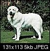 Help, flea explosion! Hartz drops useless, will boric acid work?-great-pyrenees.jpg