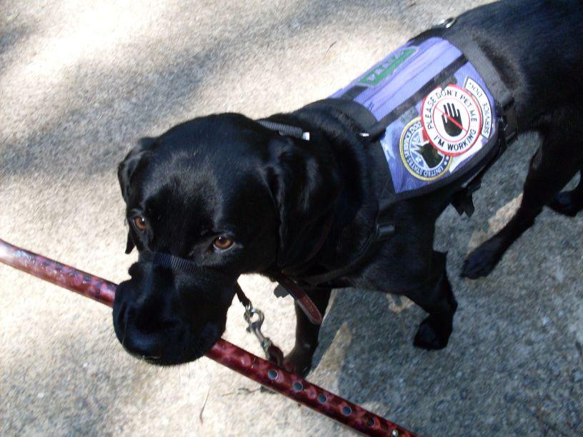 Psychiatric Service Dog Forum