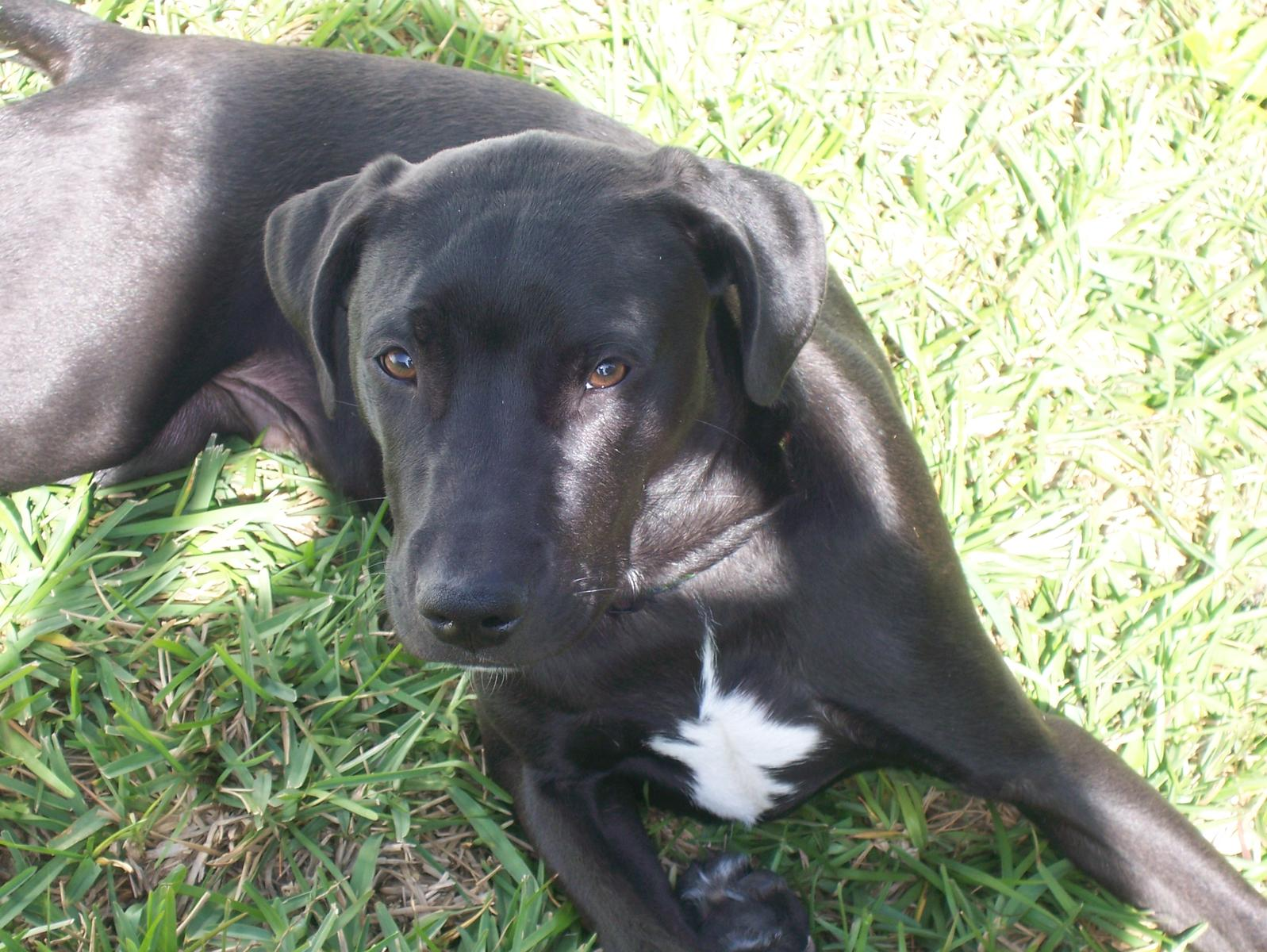 Dog DNA Test (rescued, cross, breeds, weight) - Dogs - - Page 5 - City ...