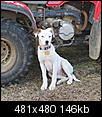 Part pit bull?-email_1477.jpg