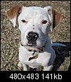 Part pit bull?-email_1371.jpg
