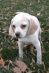What kinda dog is this? (lab, beagle, adopting, children ...