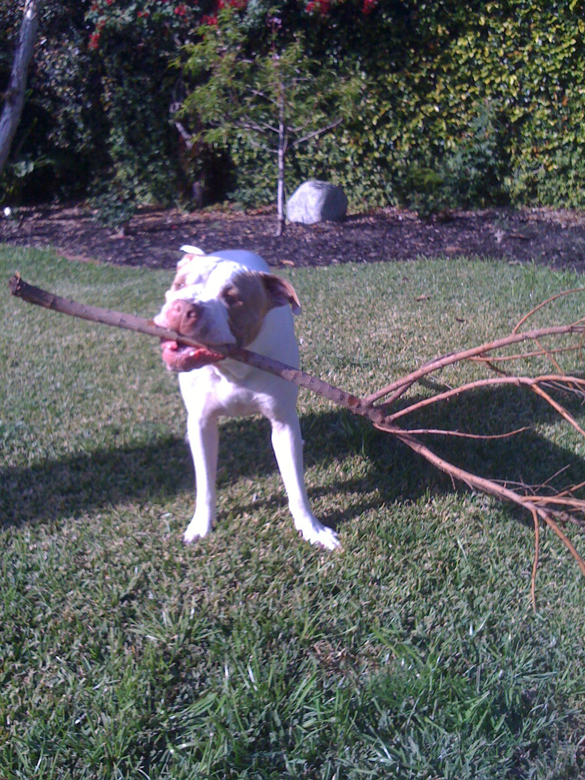 how to teach my dog to play fetch