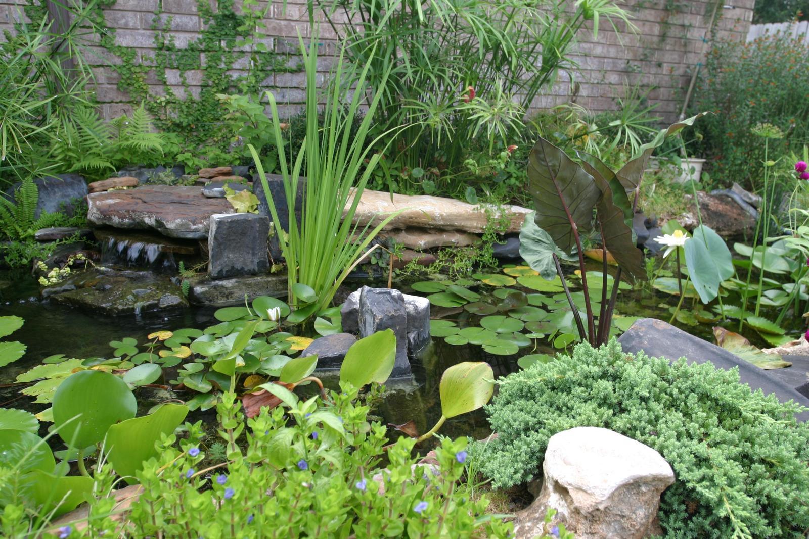Landscaping backyard landscaping ideas el paso tx for The garden pool el paso