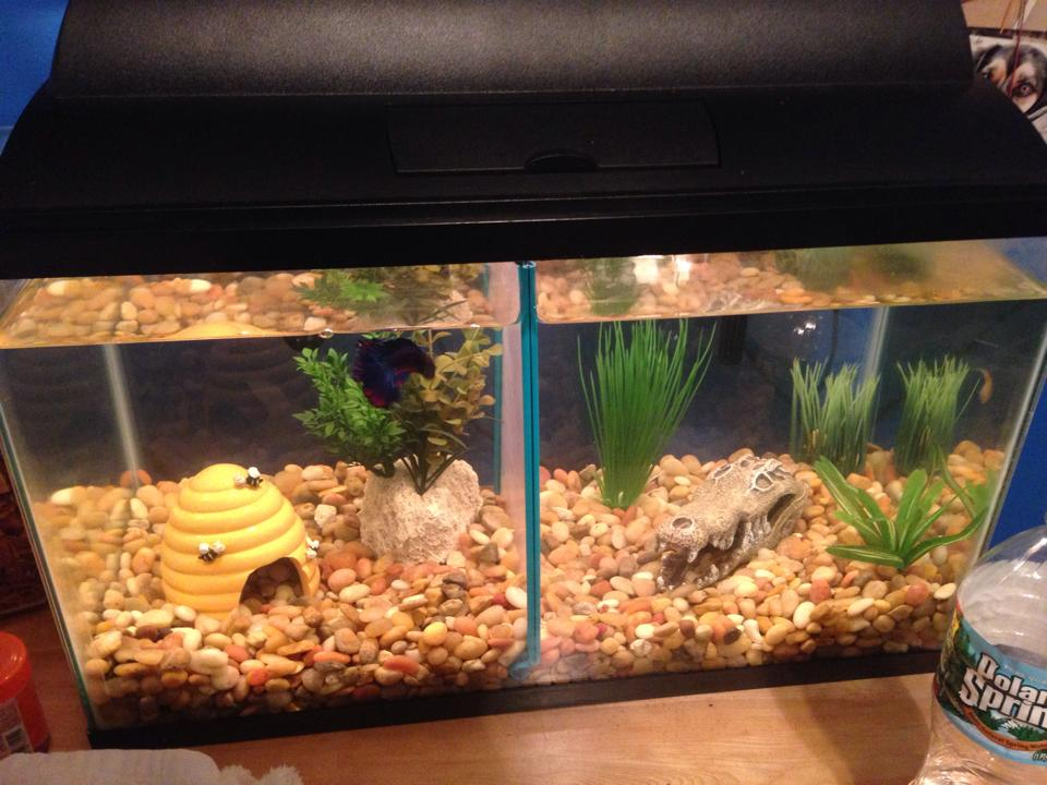 Fish owners post pics of your tank set ups small for Fish tank divider 75 gallon