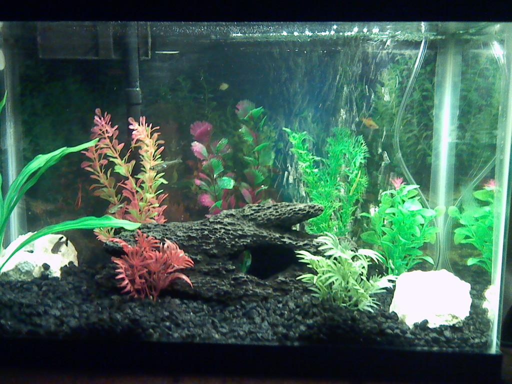 Aquarium fish tank cycle - The Fish Tank Cycle Aquarium 1 Jpg