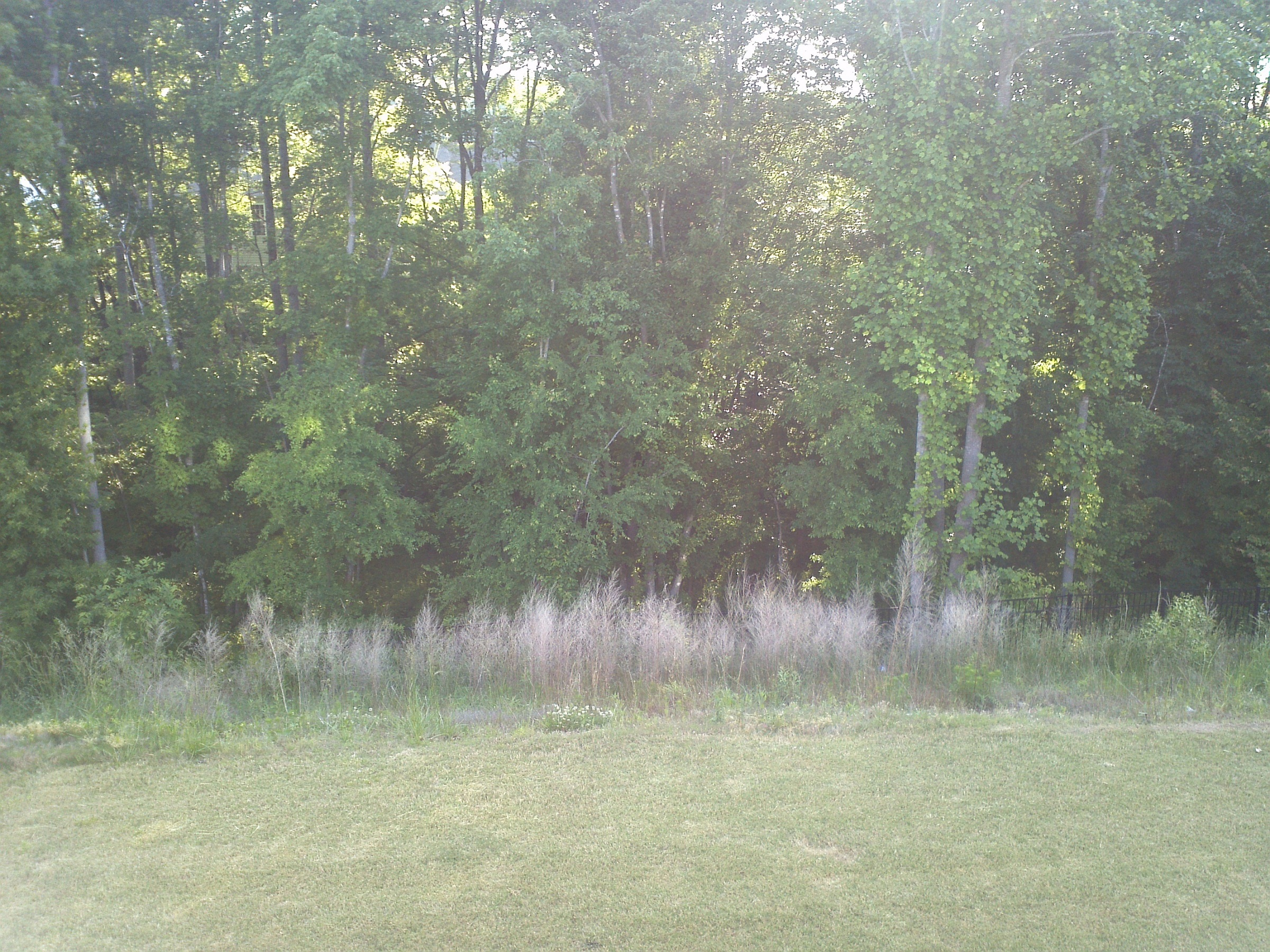 how to clear a large area of weeds