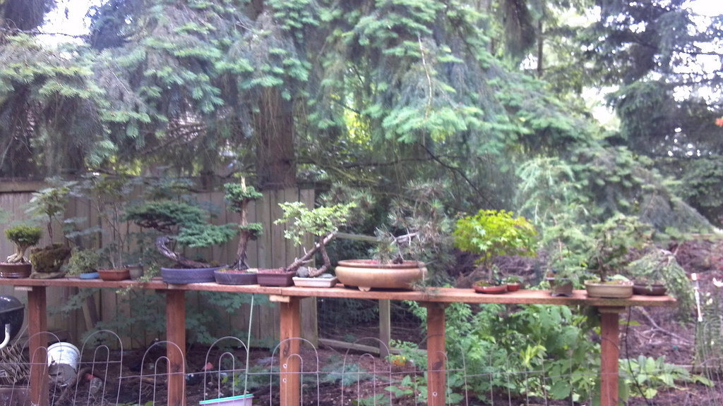 Backyard Bonsai Garden : Bonsai Garden Backyard bonsai adventures in your own backyard