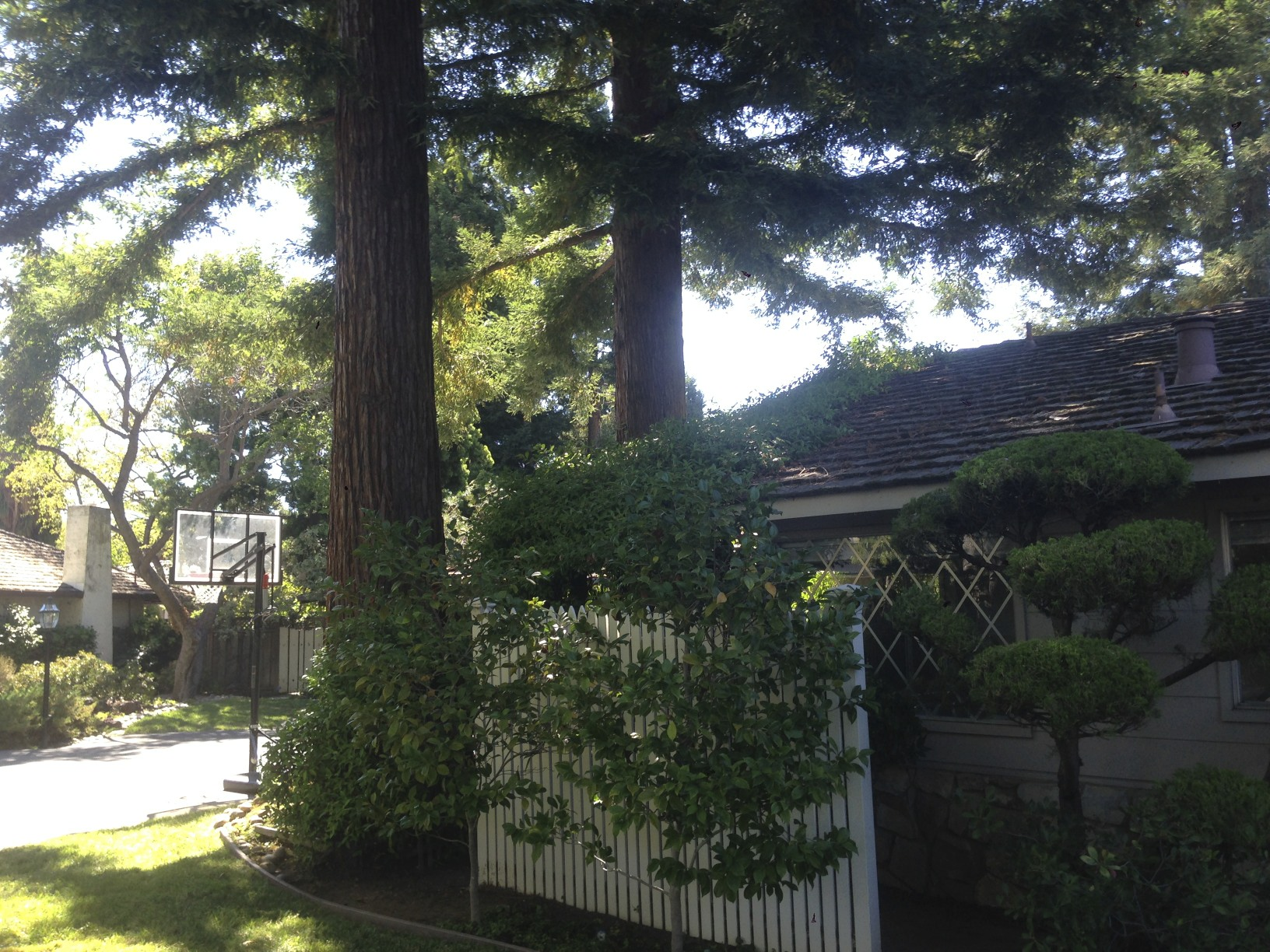 Landscaping With Redwood Trees : Pics redwood trees too close to the house redwoods g