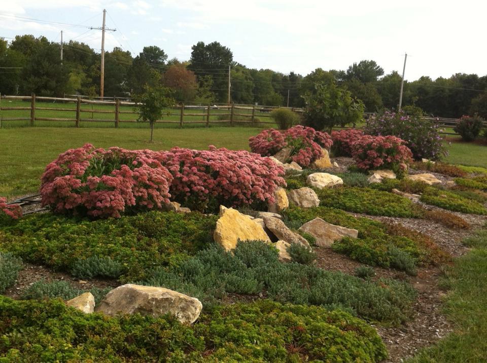 sedum ground cover lawn, grow, ground covers, grass  garden, Natural flower