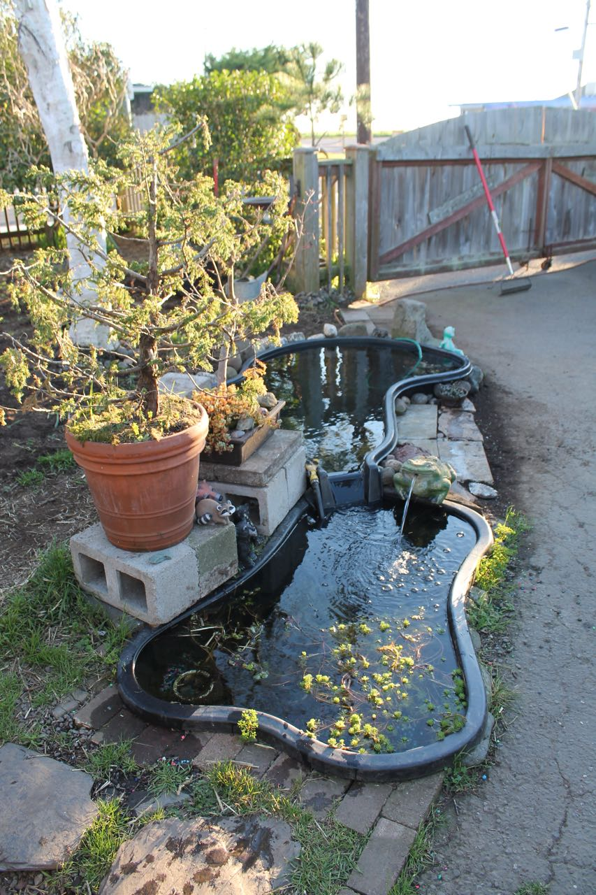 Preformed garden ponds grow solar front yard south for Preformed koi pond