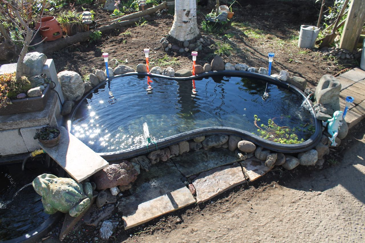 Preformed garden ponds frost summer pump eat trees for Sunfish in a backyard pond