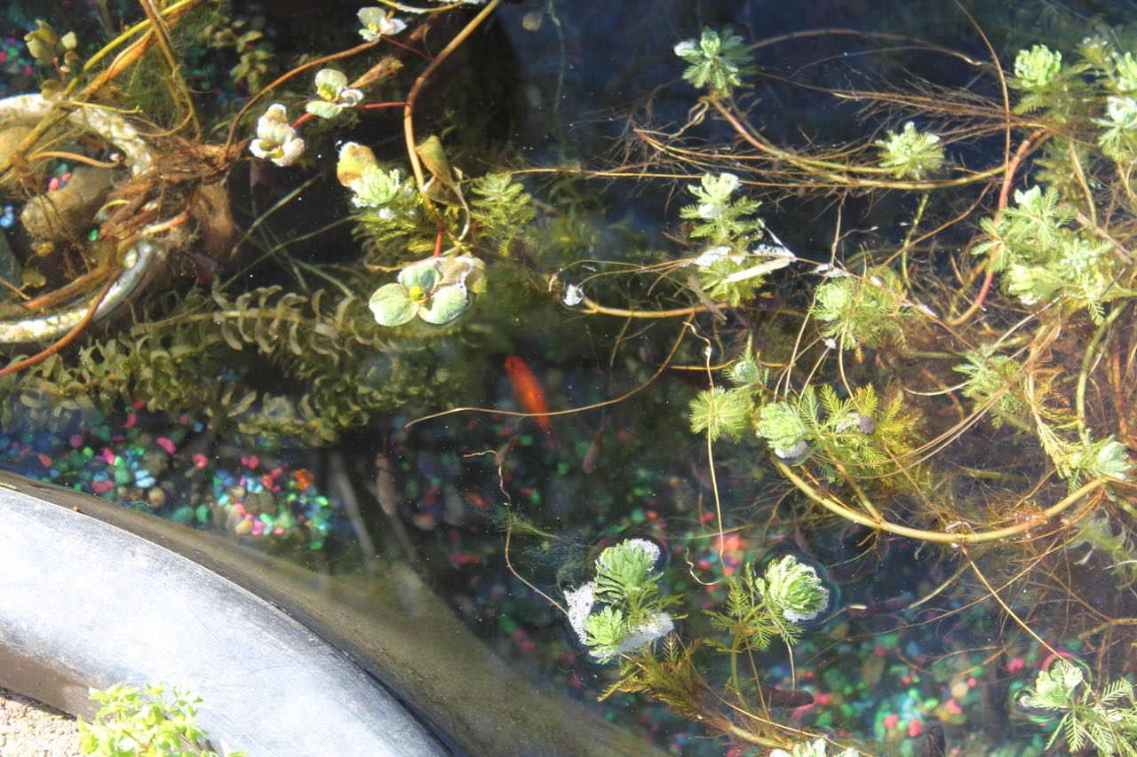 Preformed garden ponds frost summer pump eat trees for Goldfish pond pump
