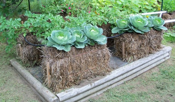 Square foot garden had bad results strawbaleexample jpg. Square foot garden had bad results  flower  growing  fertilizer