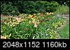 Wow..This garden writer really HATES daylilies-2014-0795.jpg