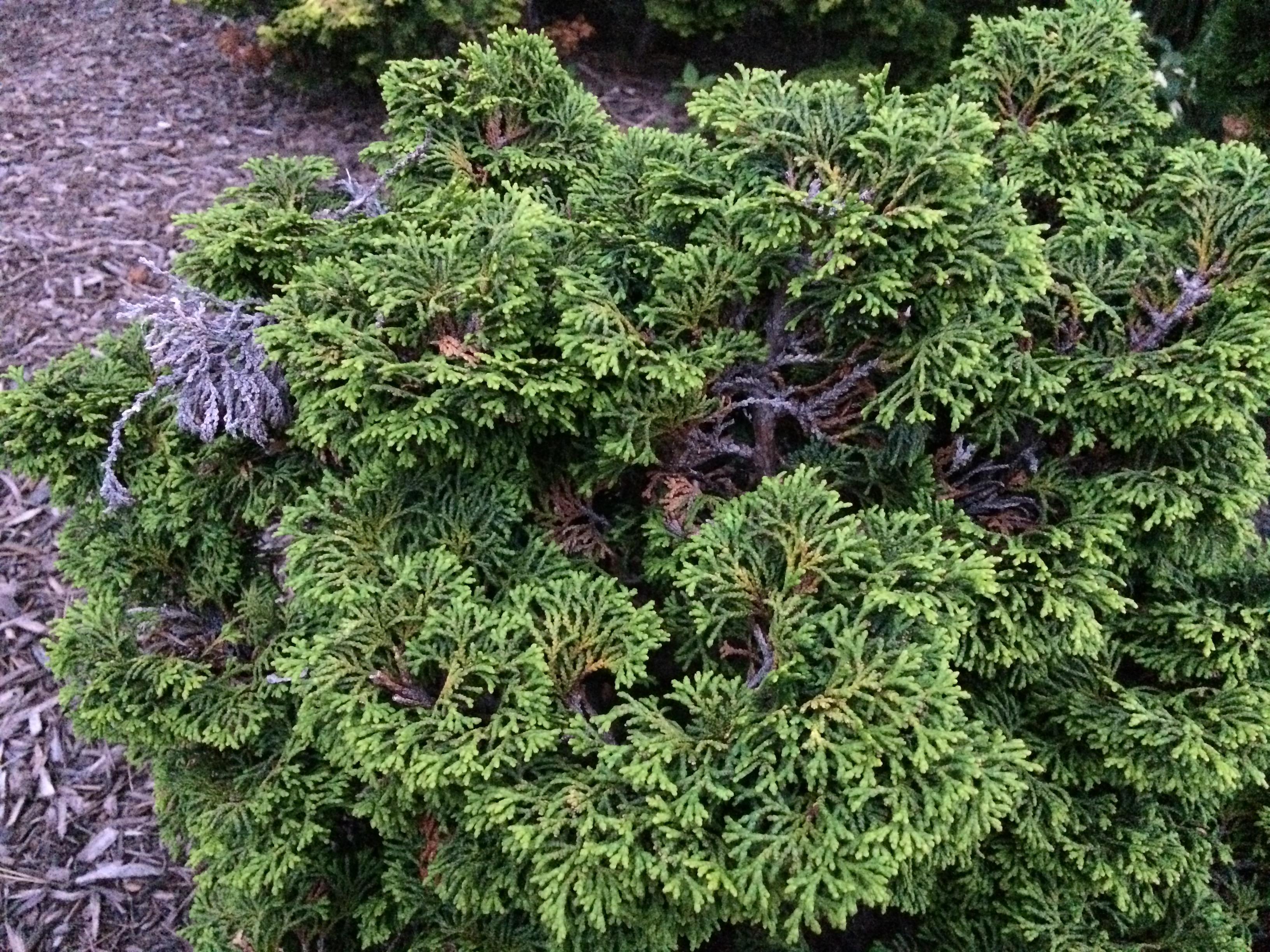 Identifying shrubs and bushes related keywords for Landscape bush identification