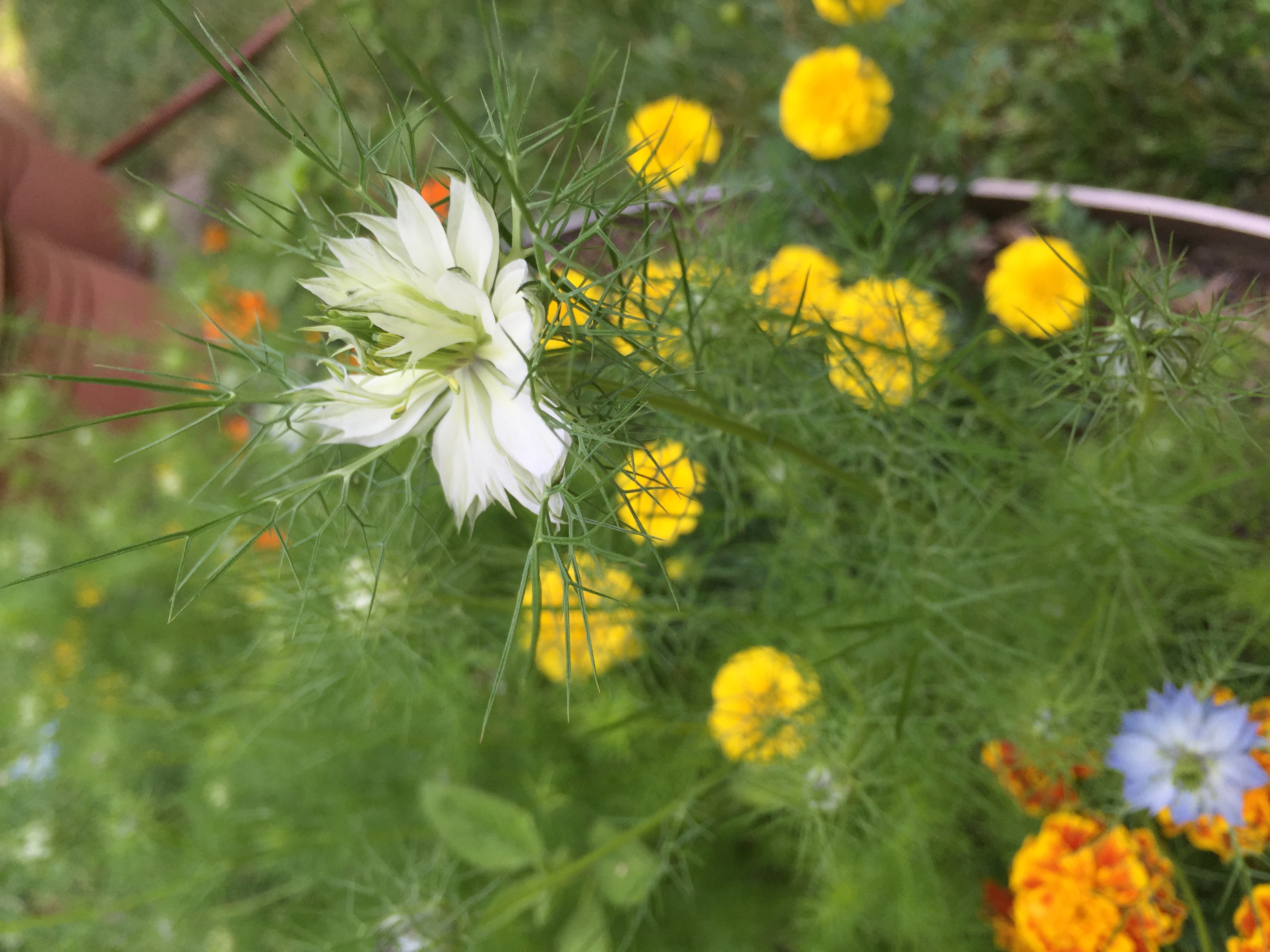What Is This Flower Flowers Growing Vegetable How To Garden