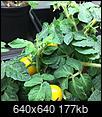 My 2016 Container Garden-img_2810.jpg