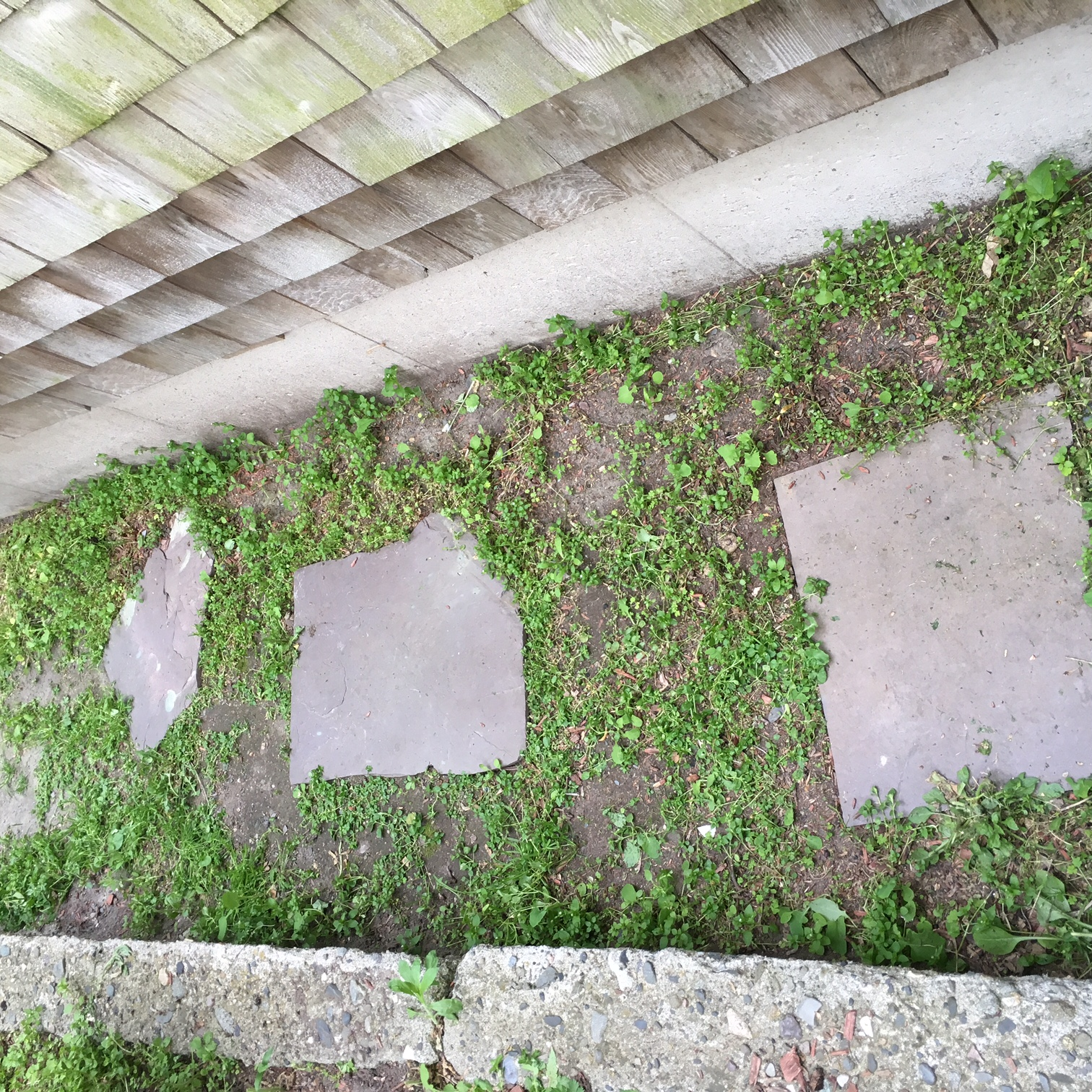 Will Roundup Kill Moss On Driveway Round Designs