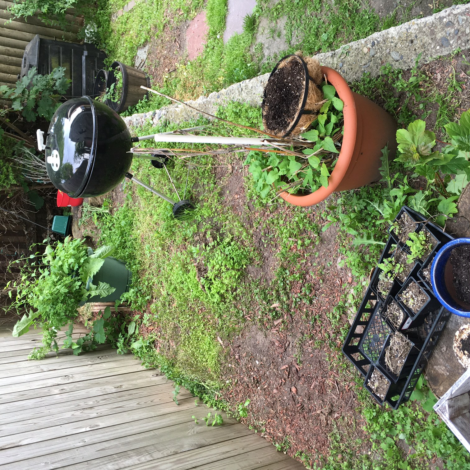 ... Best Way To Kill Weeds (pictures Included) Yard1 ...