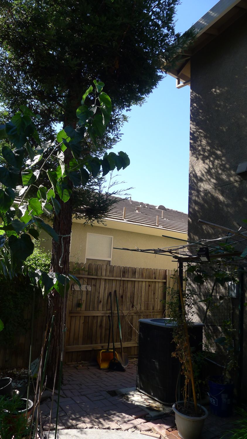 What To Do About A Backyard Redwood Tree Threatening
