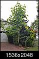 Identify The Big Tree-19911961_10159017119710188_1059220368_o.jpg