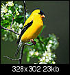 Birds at your feeders now?-goldfinch.jpg