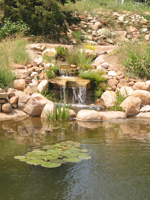 Does anyone have a koi pond or water garden trees for Koi pond forum