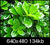 What plant is this?-may-anchor-point-194.jpg
