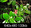 What plant is this?-may-anchor-point-195.jpg