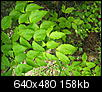 What plant is this?-may-anchor-point-205.jpg